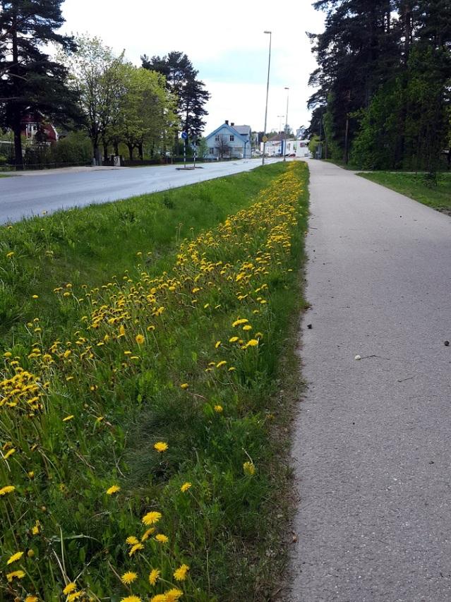 Spring in Valbo
